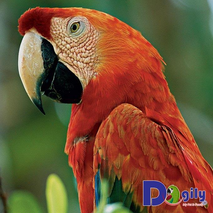 Chim vẹt được ưa chuộng tại Việt Nam