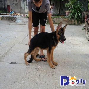 Chó bị hạ bàn không phải là hiện tượng hiếm gặp đối với những người nuôi thú cưng