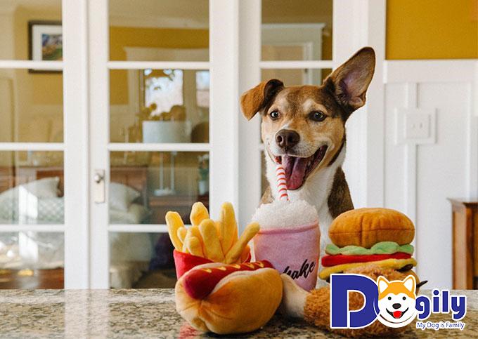 Chó cảnh nên ăn gì?