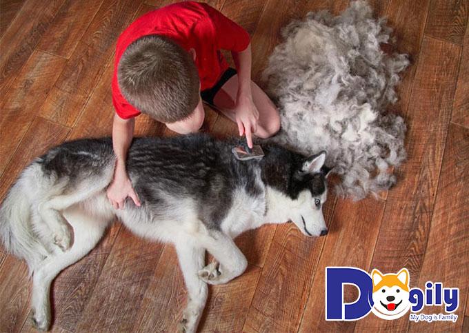 Chó rụng quá nhiều lông có thể là triệu chứng do vấn đề sức khỏe