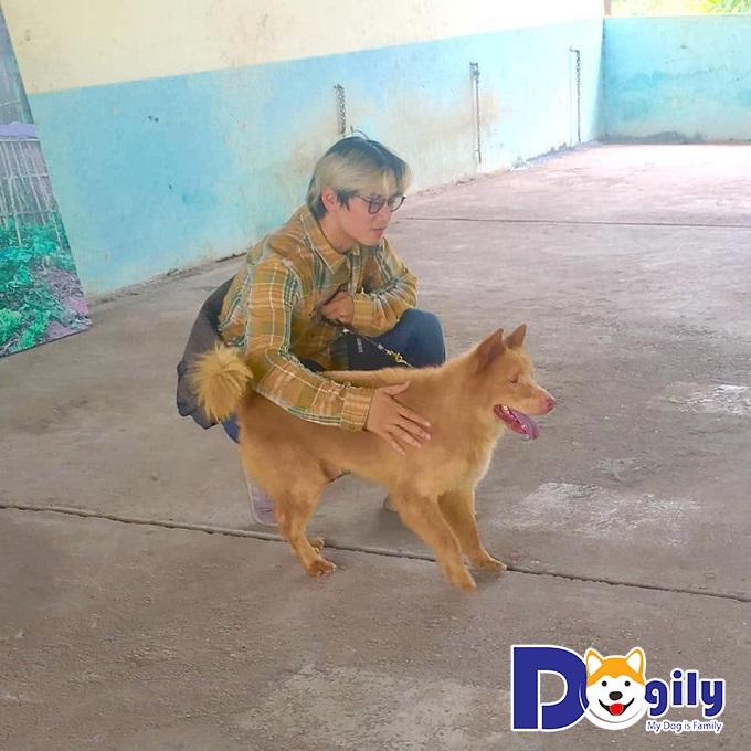 4 giống chó cỏ Việt Nam: Nguồn gốc, đặc điểm và giá cả