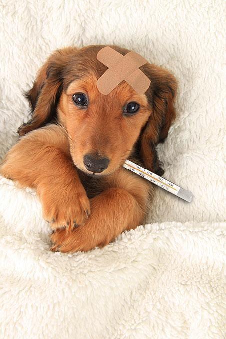 Dấu hiệu khi cún bị care là gì?