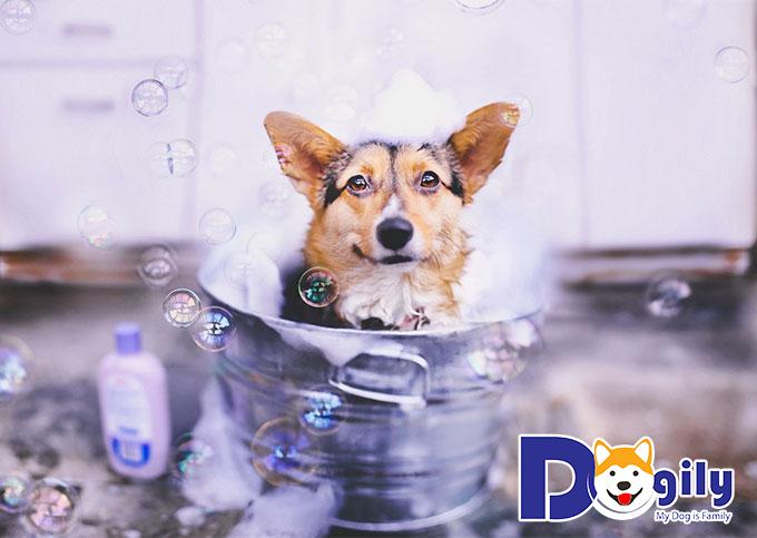 Dịch vụ tắm cho thú cưng đang rất thịnh hành