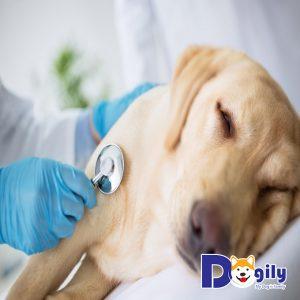 Điều trị sán chó