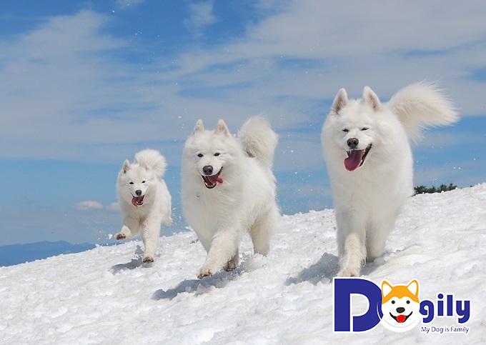 Giải mã giấc mơ thấy chó trắng