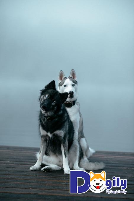 Giải mã giấc mơ thấy chó