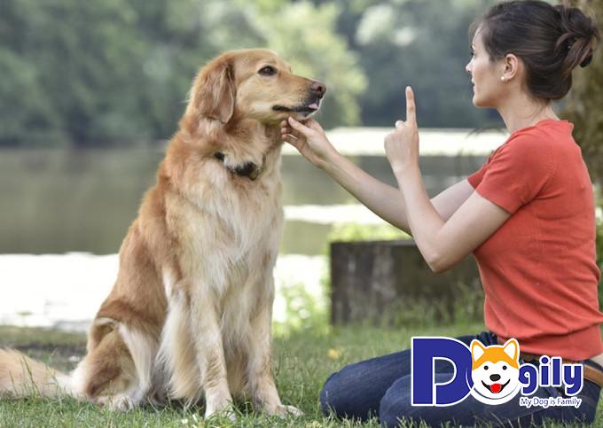 Hãy giao tiếp với cún bằng ánh mắt