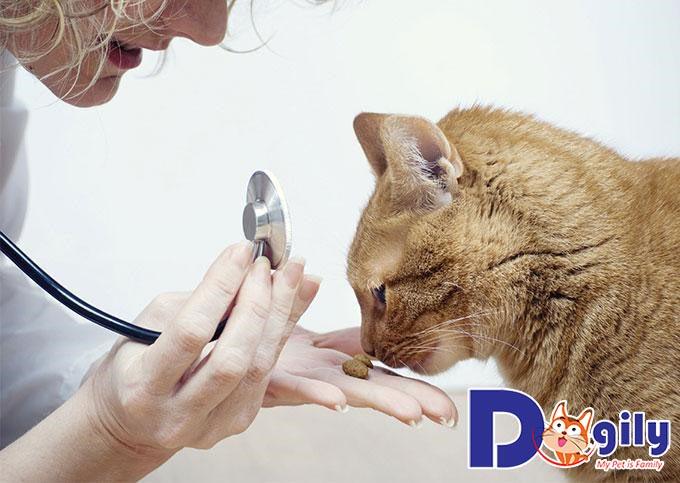 Mèo cái nên tiến hành triệt sản vào thời điểm nào?