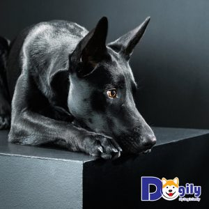 Mơ thấy con chó đen