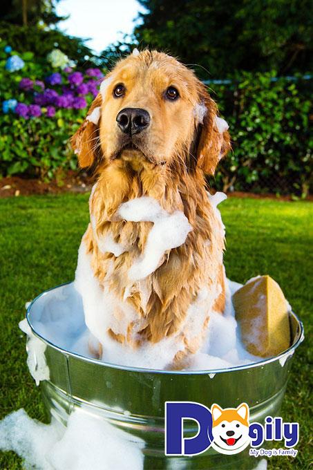 Những điều cần lưu ý khi tắm cho cún