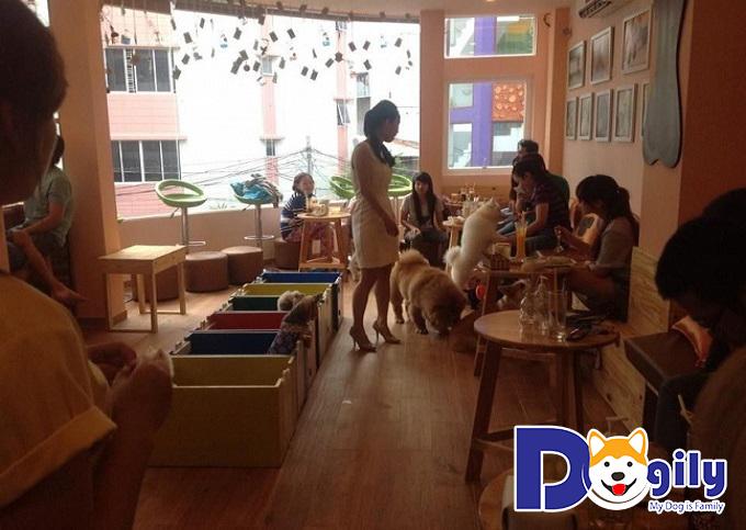Pet Ideal Café
