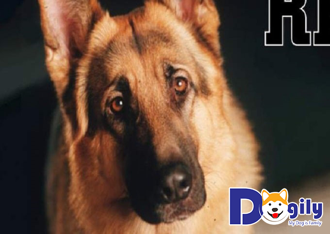 Rex – chú chó thám tử
