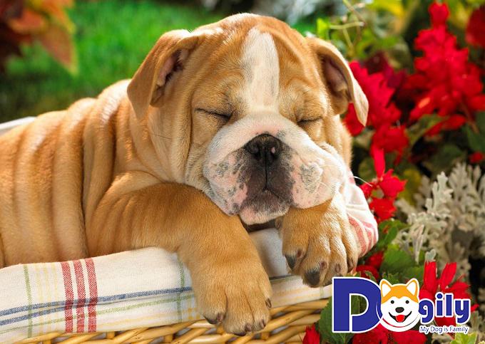 Tại sao nên nuôi thú cưng - giảm căng thẳng