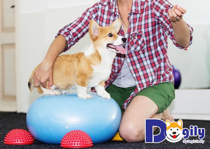 Tên gọi của cún có thể coi như một phương thức giao tiếp của bạn với cún