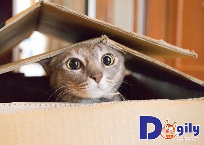 Thiến mèo thời điểm nào tốt nhất?