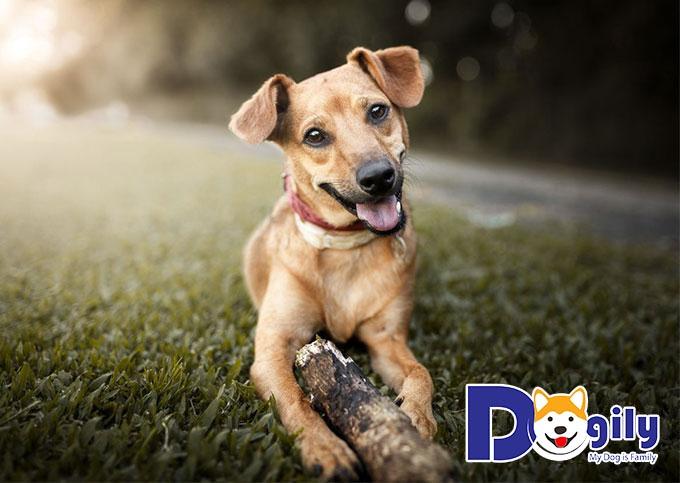 Triệt sản cho chó đem lại những lợi ích gì?