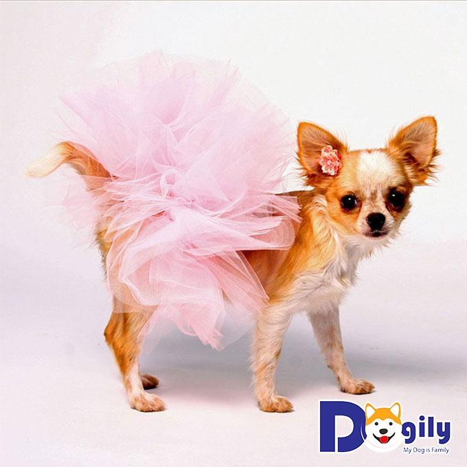 Triệt sản chó cái – Quá trình và cách chăm sóc sau khi phẫu thuật