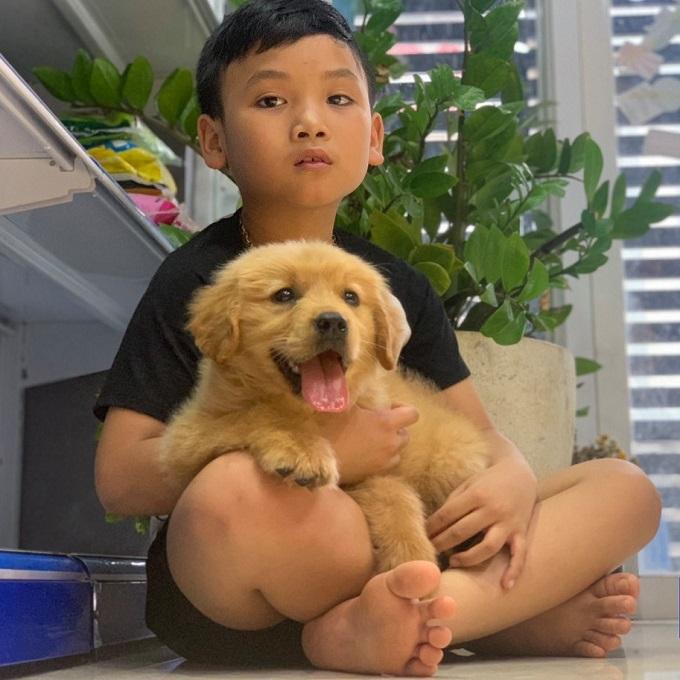 Golden thuần chủng | Mua chó Golden vàng nâu ở đâu chất lượng ( MS : 7919G )