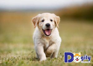 Chạy cùng cún sẽ giúp cún thân thiết với chủ hơn