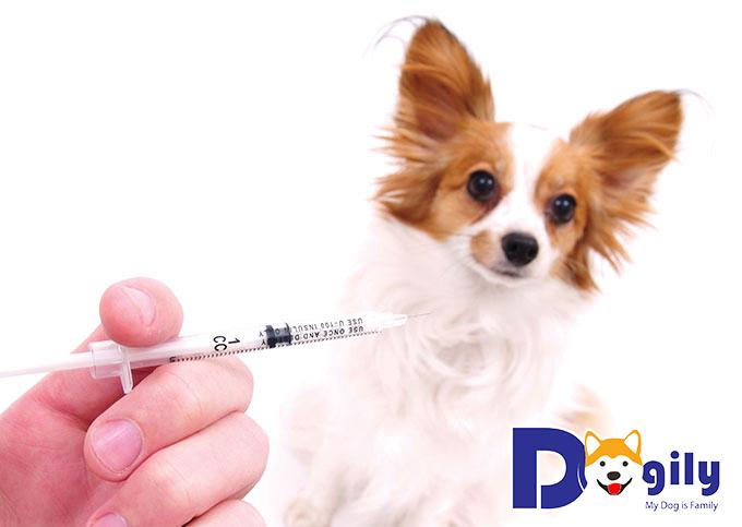 Chó bị bệnh đường ruột : Nguyên nhân và cách chữa trị đúng phương pháp