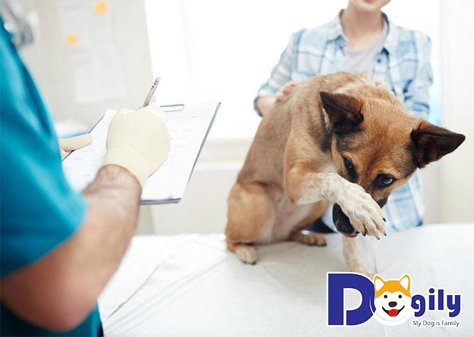 Khi chó bị hóc xương, bạn nên mang chúng đến cơ sở thú y gần nhất