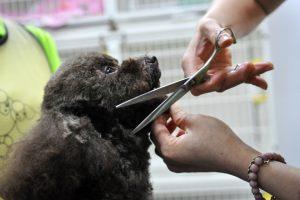 spa dịch vụ thú cưng