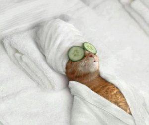 spa cho mèo chuyên nghiệp