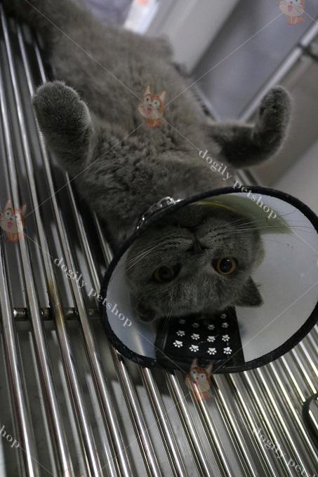 Tại sao phải triệt sản mèo đực?
