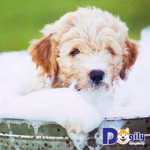 Tắm cho cún