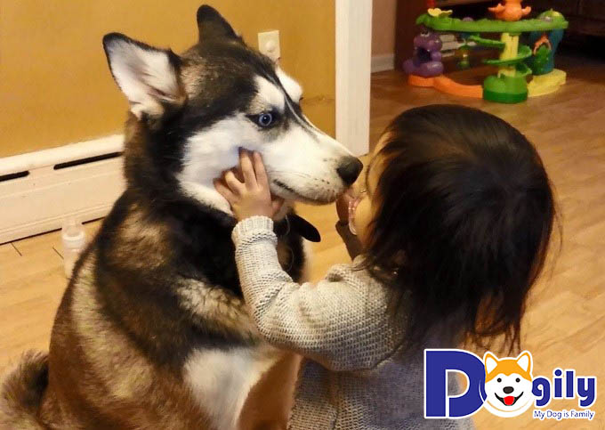 Ảnh chó Husky
