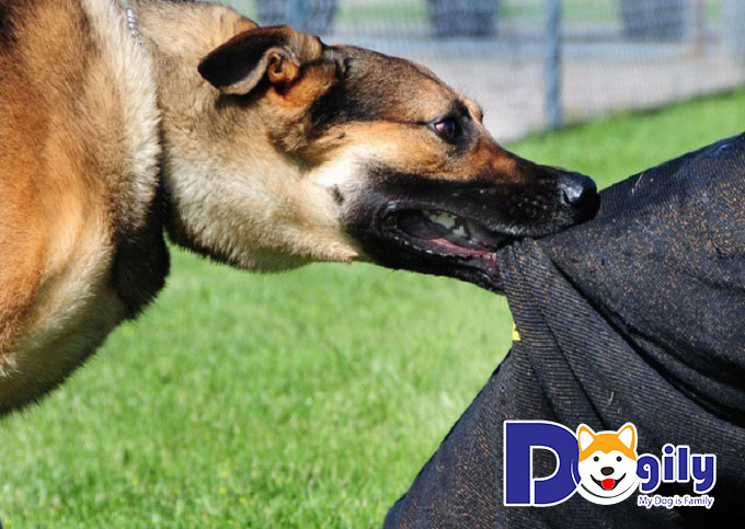 Cần chú ý xử lý vết thương khi bị chó dại cắn
