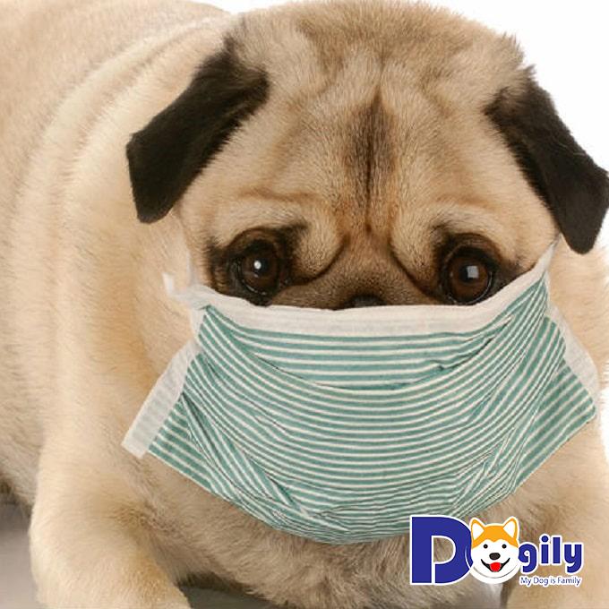 Chó bị sổ mũi