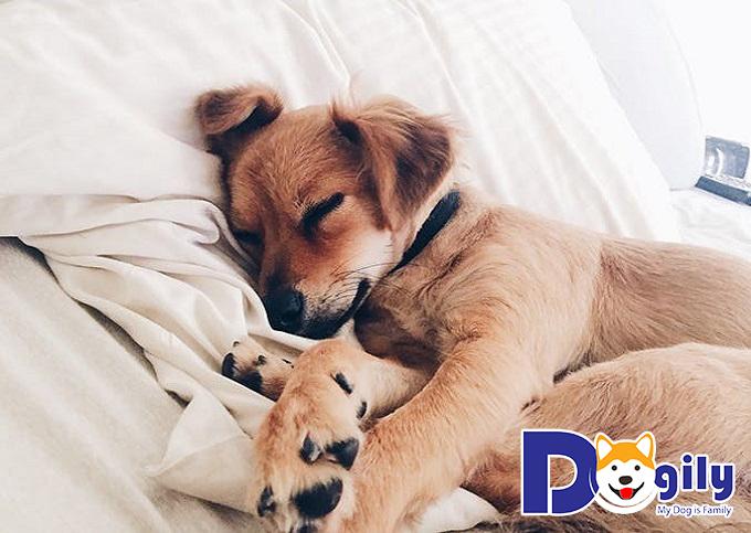 Cho cún nghỉ ngơi một thời gian và không vận động mạnh