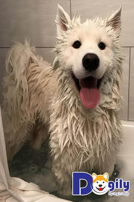 Đến giờ đi tắm rồi cả nhà ơi