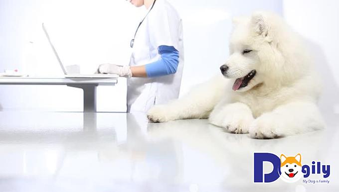 Hãy đưa cún đến bác sĩ thú để chữa bệnh ghẻ