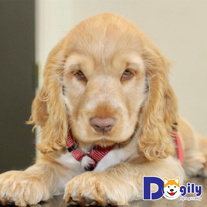 Biểu hiện và cách điều trị khi chó bị ong đốt như thế nào?