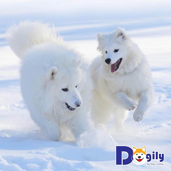 Những bức ảnh chó cười và chơi đùa vui vẻ như thế này ai mà chịu nổi chứ!
