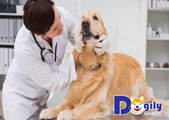 Phác đồ điều trị bệnh giun đũa cho chó