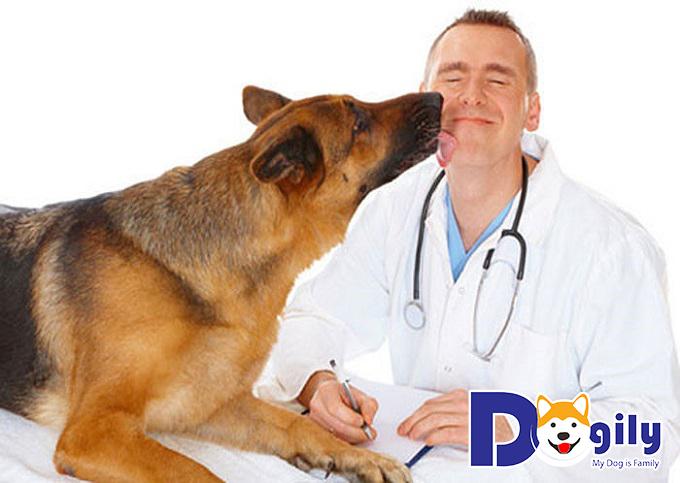 Phòng ngừa bệnh giun đũa chó
