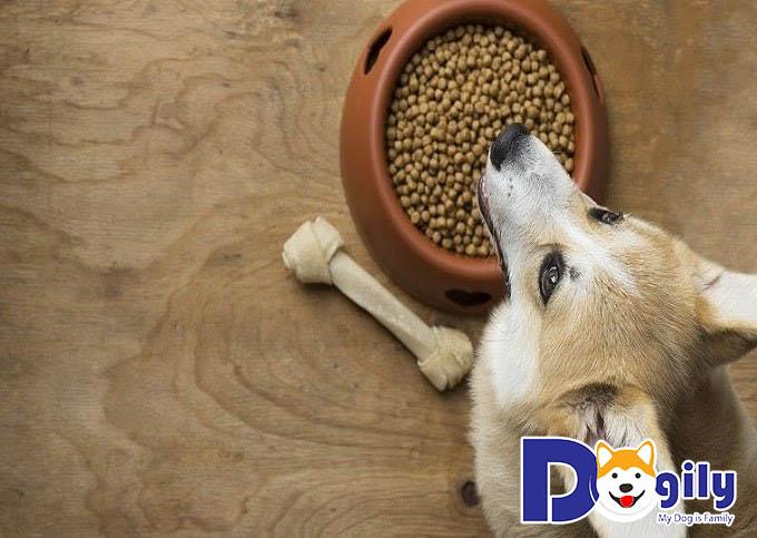 Thức ăn cho chó Corgi