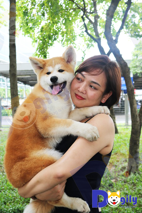 Giống chó Akita rất trung thành và tình cảm. Ảnh: Ms Vương Trang bên cậu Vàng nhà Dogily.