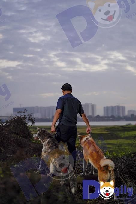 Chó Akita Inu có nguồn gốc từ cực bắc đảo Honsu. Ban đầu chúng được sử dụng trong các cuộc săn gấu và các loài thú lớn khác