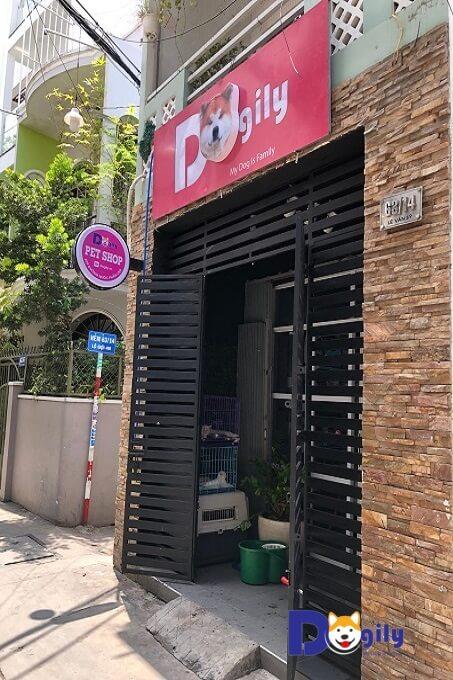 Cửa hàng bán chó Akita Inu của Dogily Petshop Phú Nhuận ( tại 63/14 Lê Văn Sỹ, quận Phú Nhuận, Tphcm).