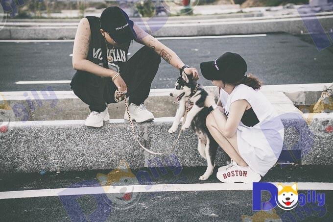 Youtuber Xuân Thảo Vlog đang huấn luyện xã hội hóa cho chú chó Husky màu đen trắng mua tại Dogily Petshop Phú Nhuận.