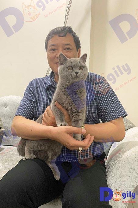 Ảnh: Khách hàng mua mèo Anh lông ngắn màu xám xanh nhập khẩu liên bang Nga của Dogily Petshop.