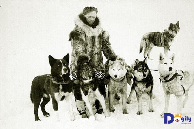 Leonhard Seppala và đàn chó husky anh hùng huyền thoại.