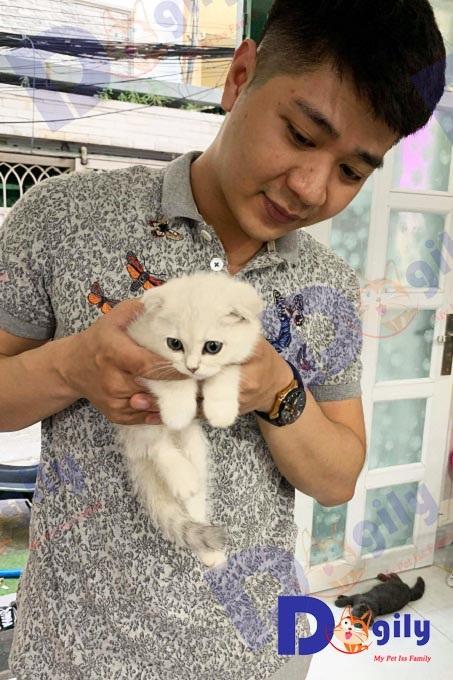 một khách hàng mua mèo tai cụp màu silver tại Dogily Pet shop Quận 1 (HCM).