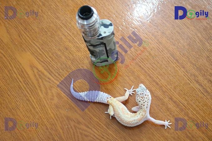 Thức ăn khoái khẩu cho Leopard Gecko là côn trùng. Có bán sẵn tại các Petshop hoặc cửa hàng chim, cá cảnh.