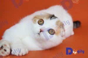 Bạn cần tìm hiểu kỹ thông tin trước khi nuôi mèo