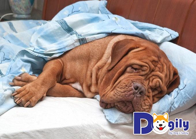 Các bé có thể bị mệt mỏi do tiêu chảy vì thức ăn kém chất lượng